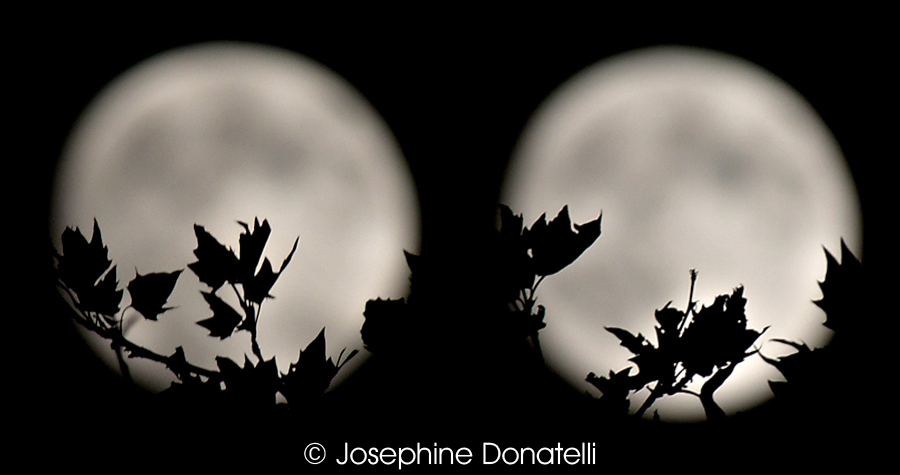 CapturedEvent-Moon-Josie-Donatelli